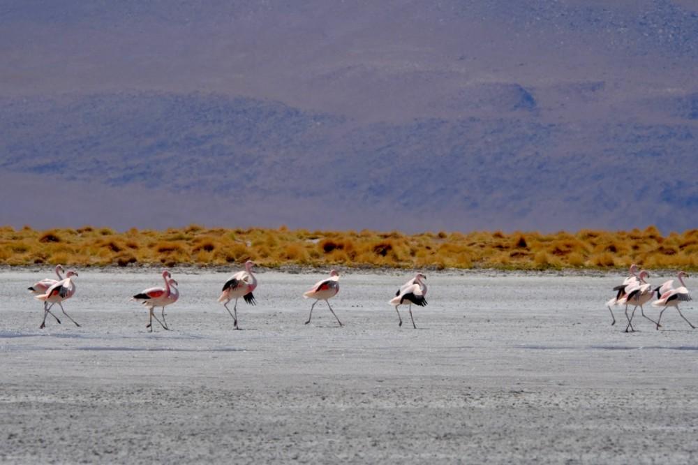 Flamingo-13.jpg